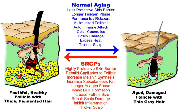 Hair and Aging Effects